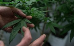 """Gipson: Federal Government continues to ignore """"budding"""" cannabis acceptance"""