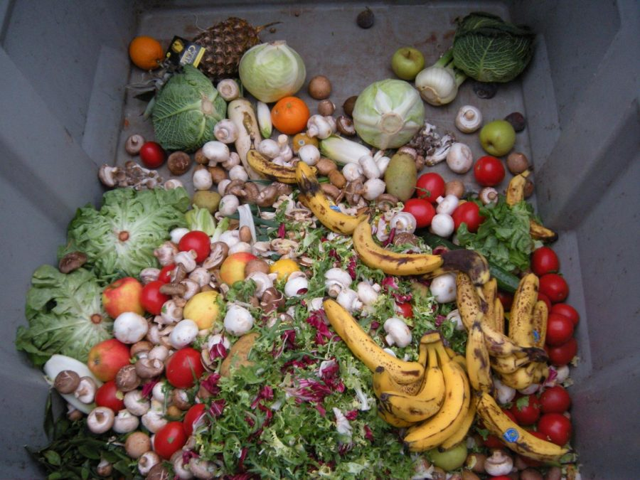 Many+grocery+stores+throw+out+edible+food+that+may+not+look+appealing+to+customers.+